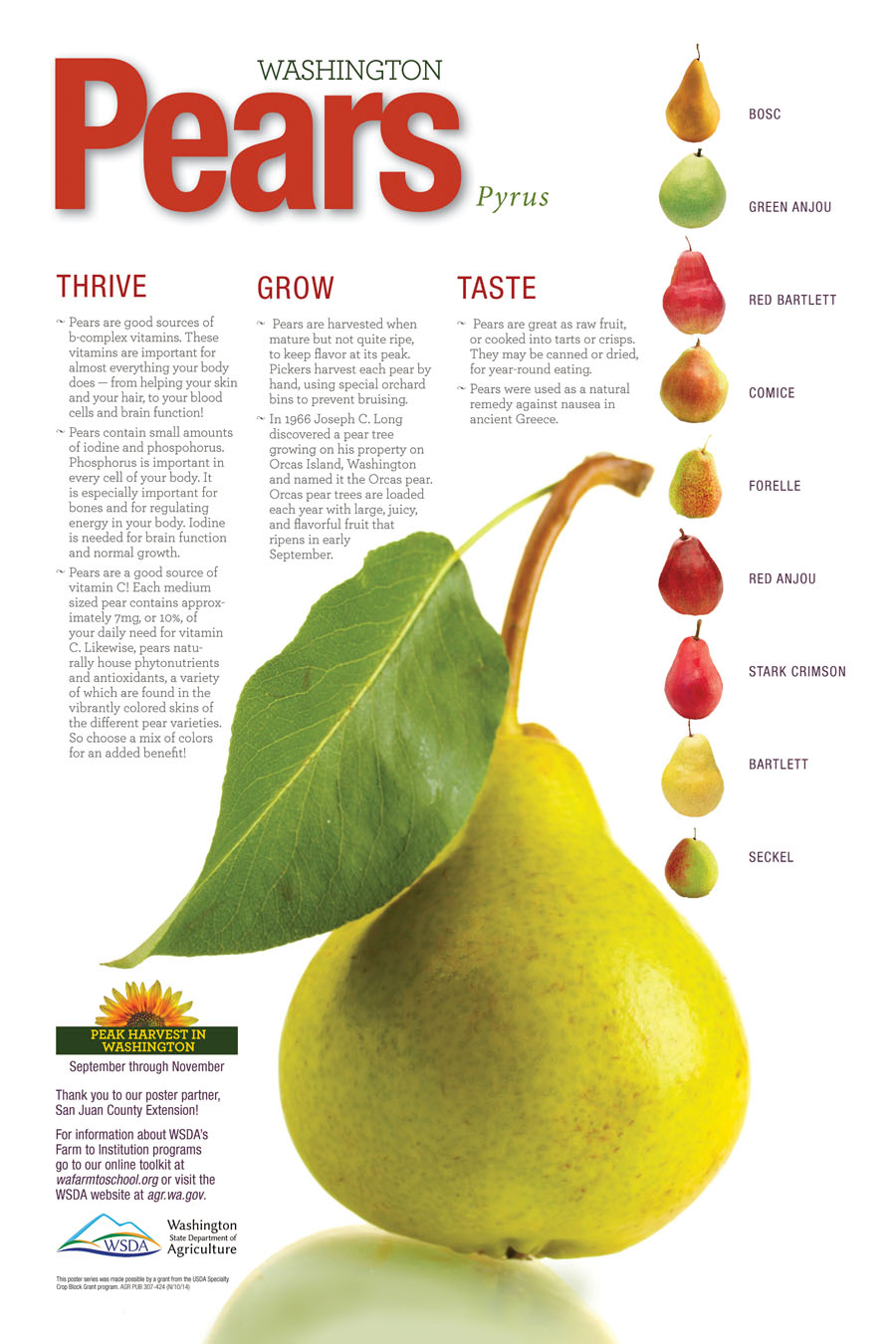 WA Harvest Pear Poster