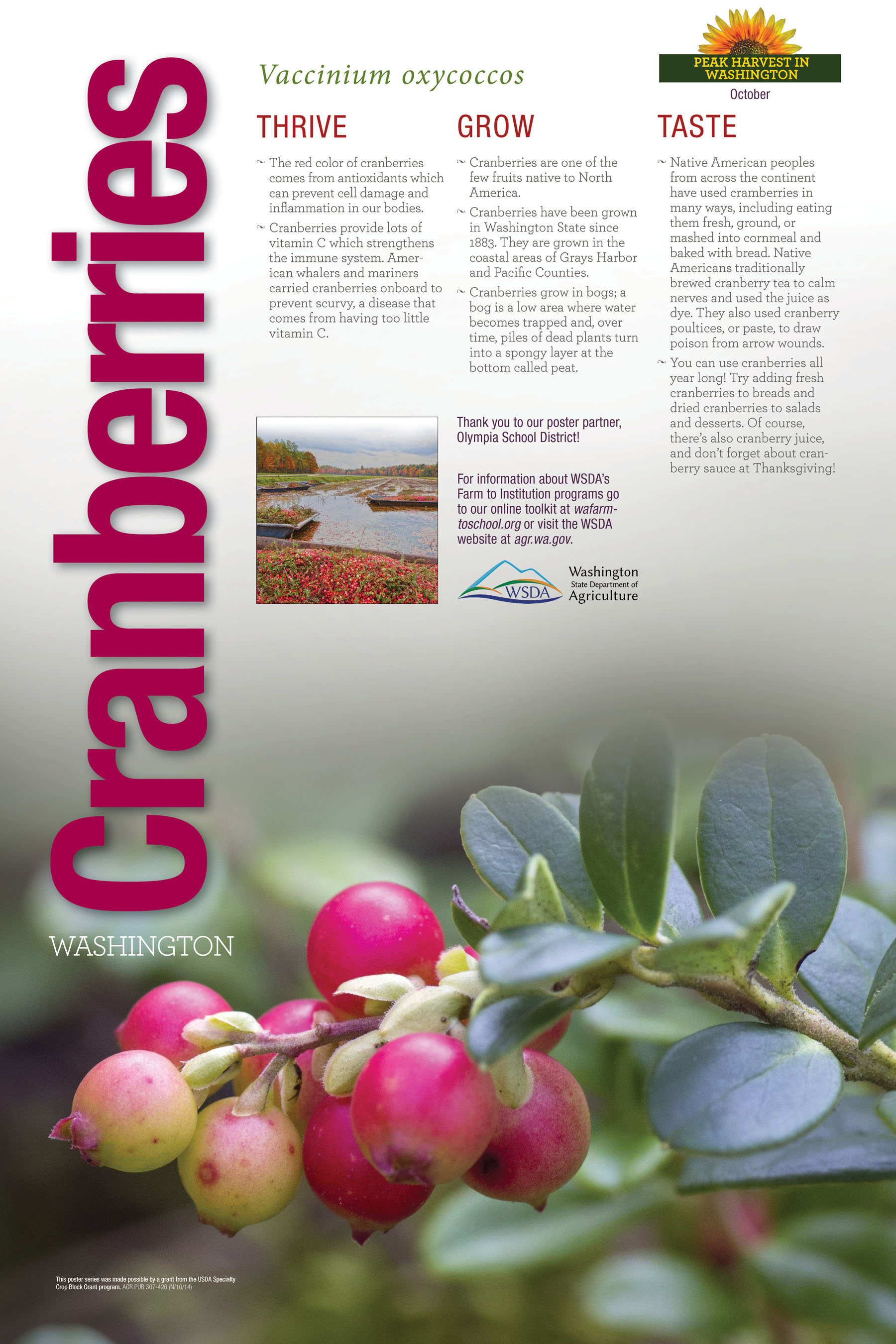 WA Harvest Cranberry Poster