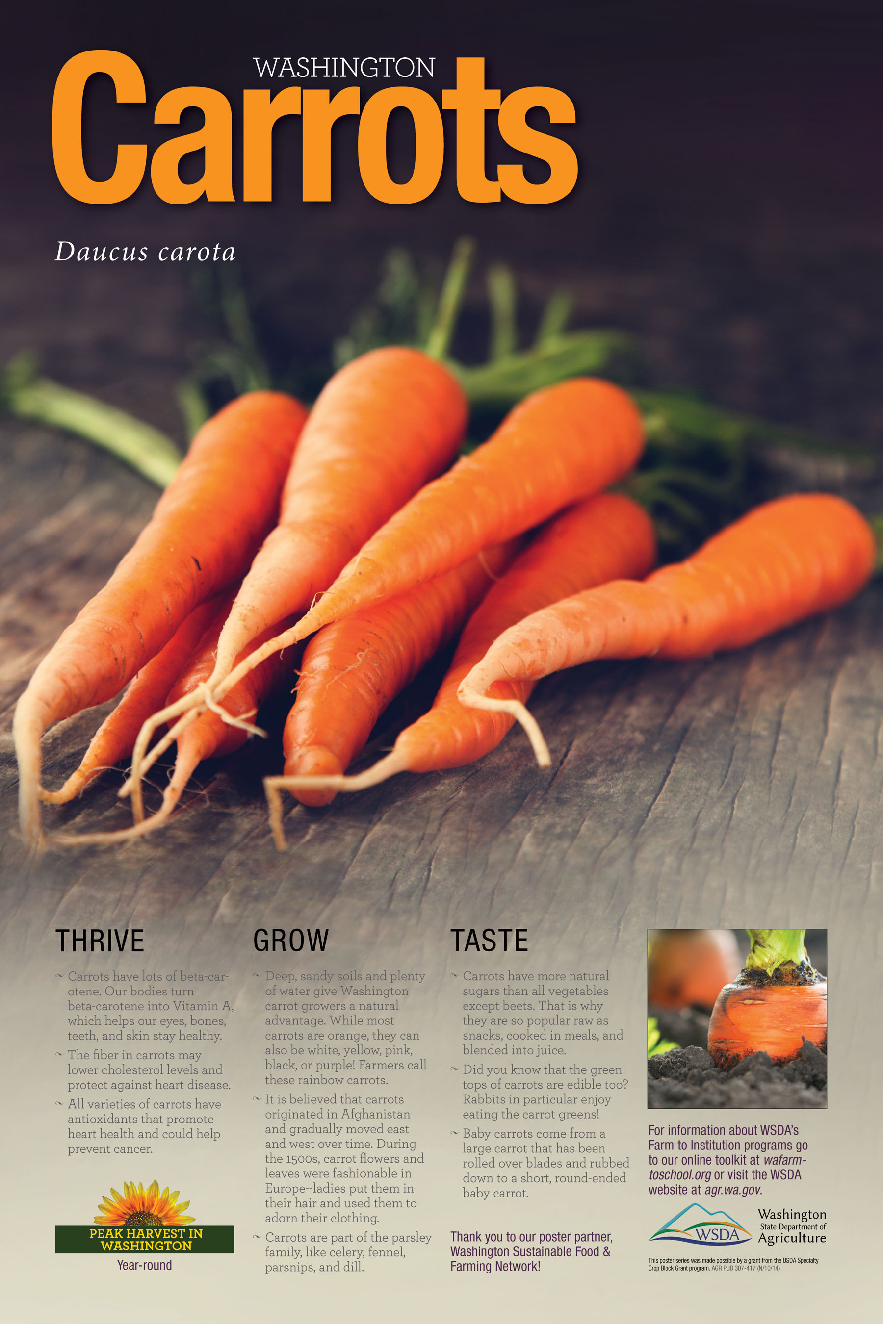 WA Harvest Carrot Poster